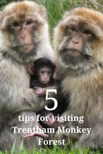 5 tips for Trentham Monkey Forest