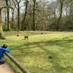 Review: Trentham Monkey Forest, Staffordshire