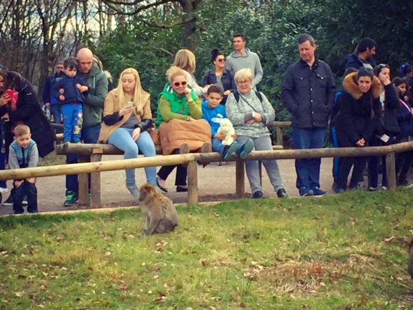 visitors with a macaque at Trentham Monkey Forest