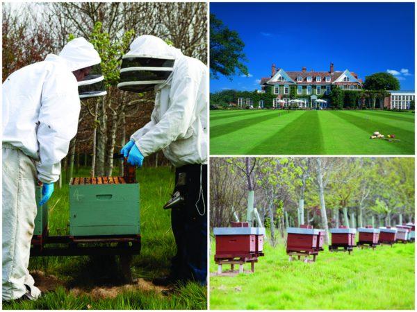 Chewton Glen bees