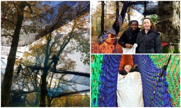 Treetop Nets Lake Windermere