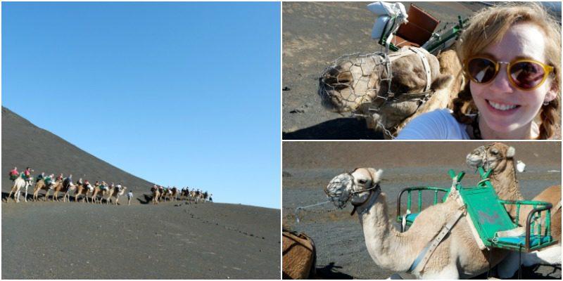 Camel ride collage Lanzarote
